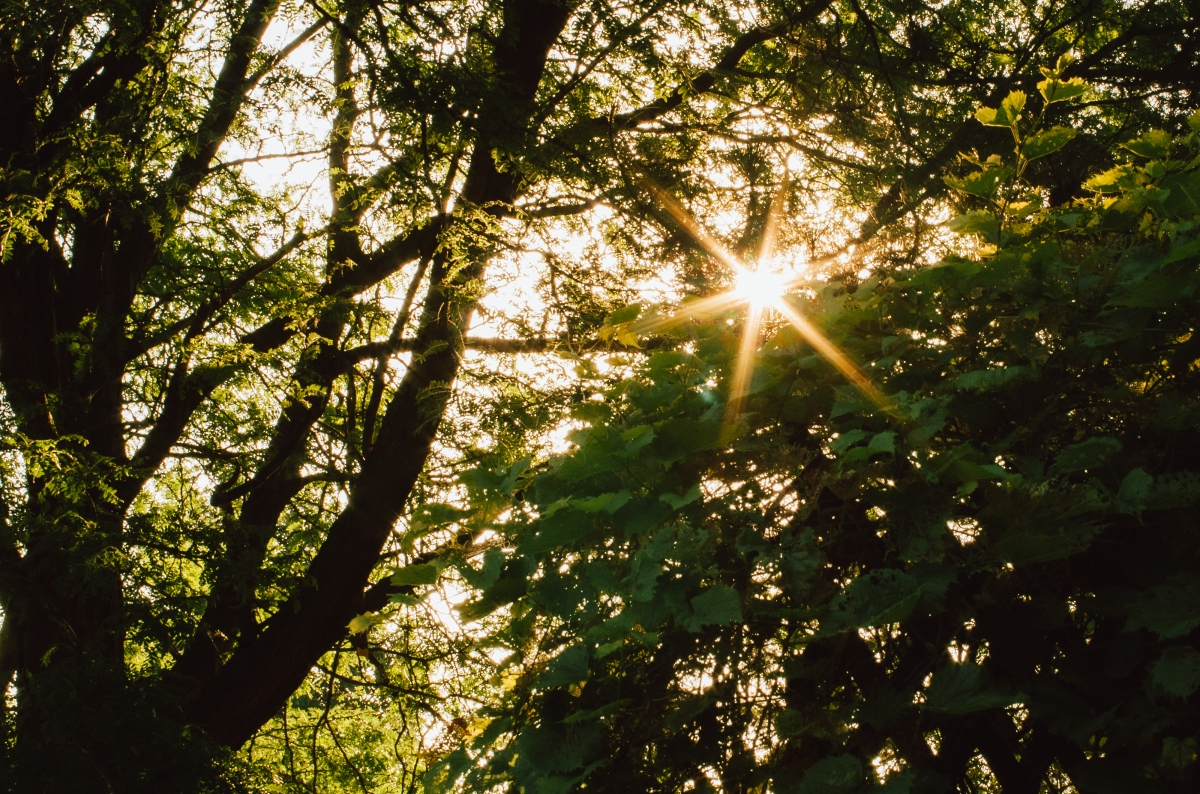 sunburst_28169641521_o.jpg