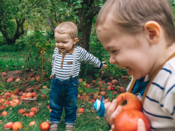 ditmars-orchard_21835968429_o.jpg