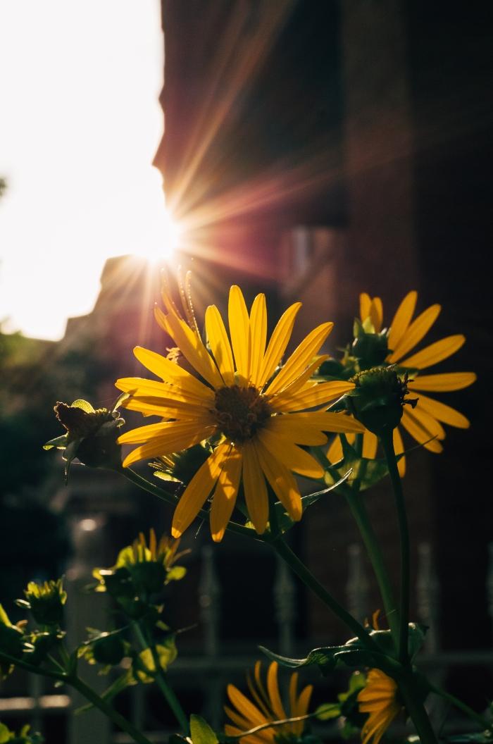 evening-light-flowers_14844684101_o.jpg