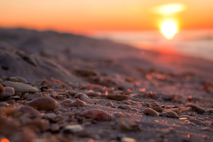 shells-at-sunrise_7253551620_o.jpg