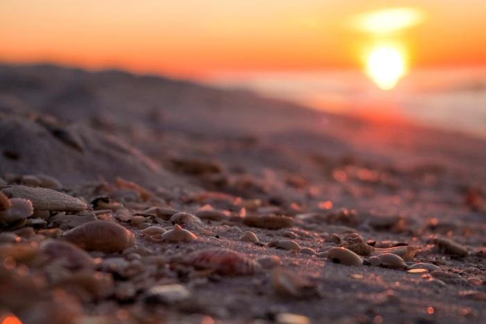 shells-at-sunrise_7253551620_o.jpg